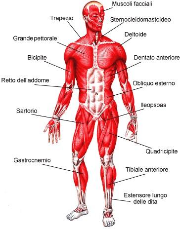 Esercizi fisici per il corpo | Metodo plurima