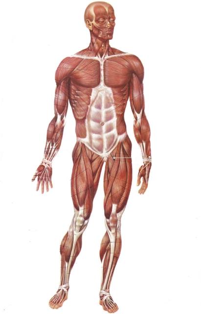 metodo per allungare il corpo